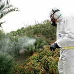 Controle de pragas com produtos químicos