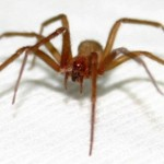 Matar aranhas